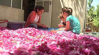الوردة الشامية ضحية الحرب في سوريا