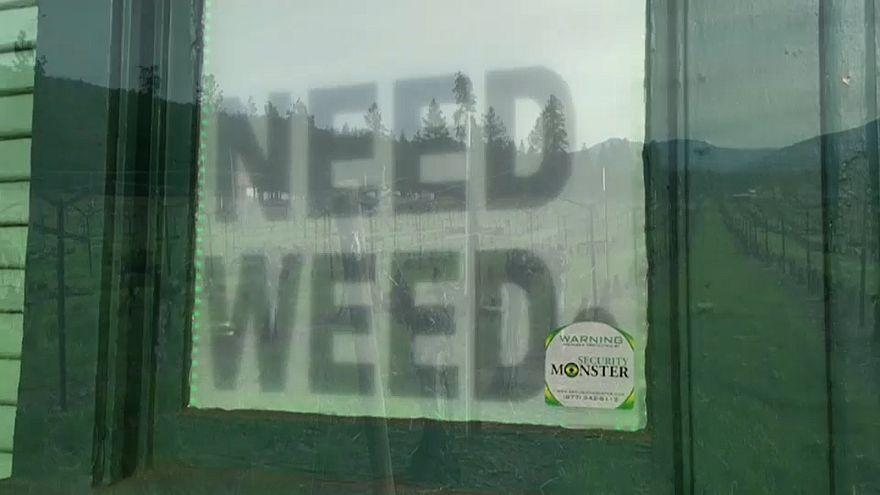 Gras und Wein aus einer Plantage: Dual Use a' la Oregon