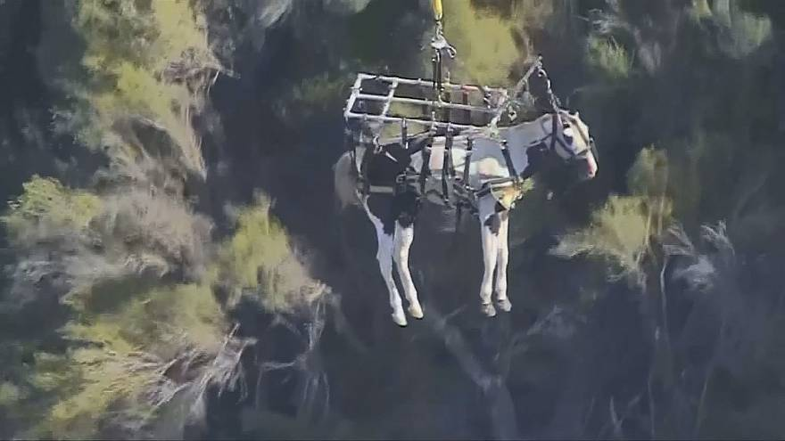 Californie : cheval volant
