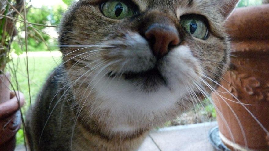 200 Katzen vergiftet
