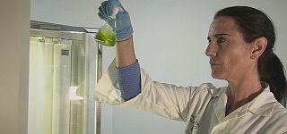 Mikroalgen - Multieinsatzfähiger Rohstoff der Zukunft