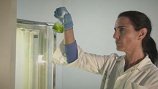 El prometedor futuro de las microalgas