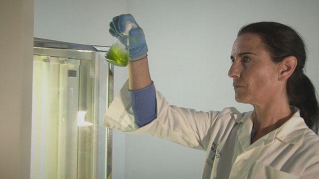 Biyoteknolojide Mikroalgler