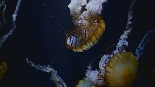 Аквариум Камо: мороженое с медузой