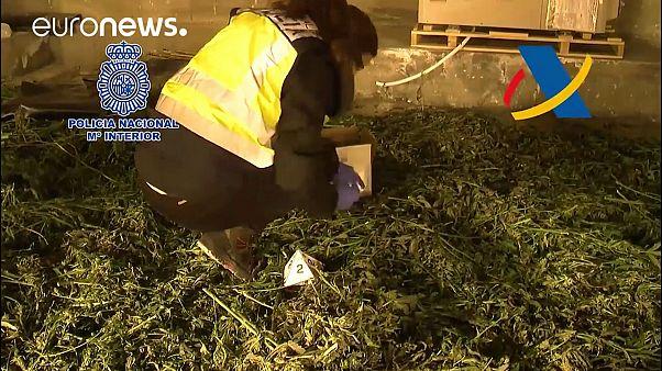 Spanyolország lesz Európa marihuána-szállítója?