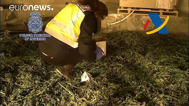 ¿España: la huerta de marihuana de Europa?