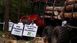 Polonya'da çevreciler ağaç kesimine karşı ayakta
