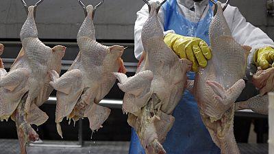 Grippe aviaire : embargo sud-africain sur le poulet zimbabwéen