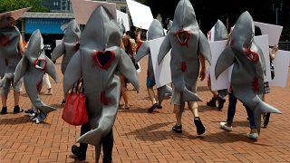 Gegen Haifischflossensuppe - 500$ das Pfund und eine Umweltsünde