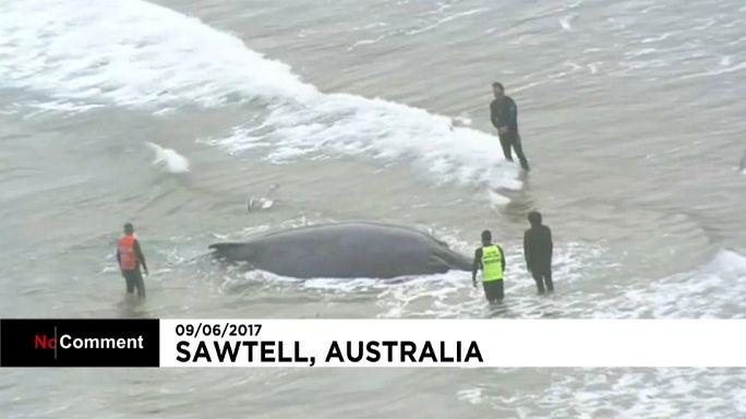 New South Wales: Gestrandete Wale