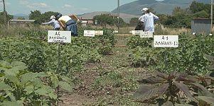 Takeaways: Ancient crops, future food