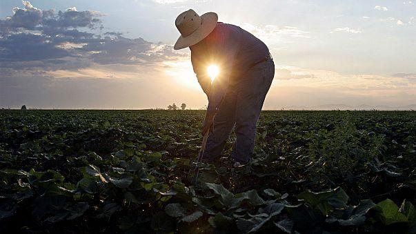 Pestizid-Zulassung: EU-Parlament zweifelt an europäischer Lebensmittelbehörde