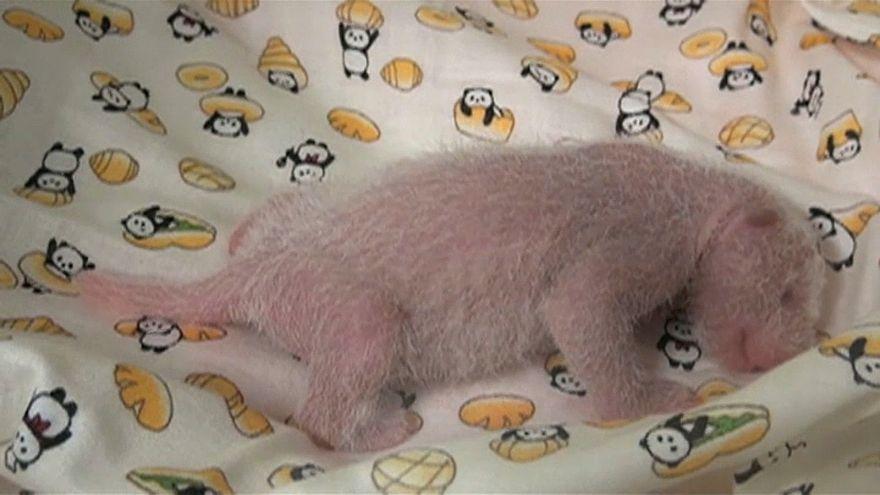 Panda-Baby entzückt Japan