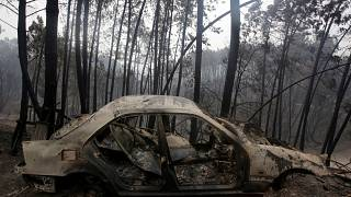 Portugal burning as wildfires kill scores