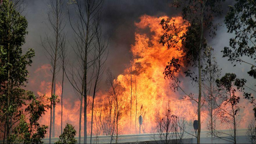 آتش سوزی مرگبار پرتغال؛ ۱۲ نفر در داخل تانکر آب زنده ماندند
