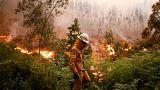 Waldbrand in Portugal: So hilft Europa