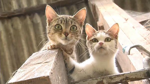 Кошки покорили мир на кораблях?