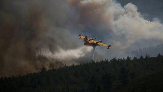 Portugal: Waldbrände lodern weiter