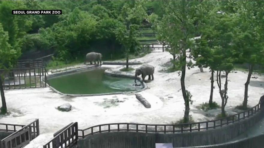 Babyelefant stolpert ins Wasserbecken
