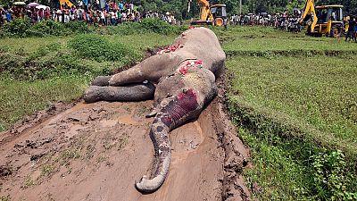 Zimbabwe : l'empoisonnement, arme fatale des braconniers contre les éléphants