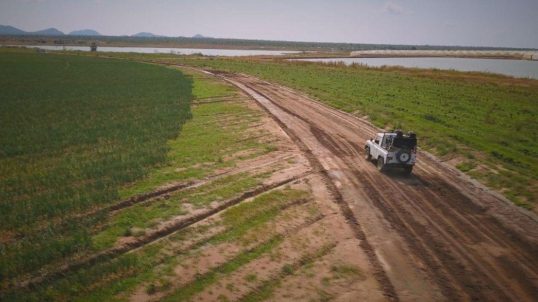 Mezőgazdasági bumm Angolában