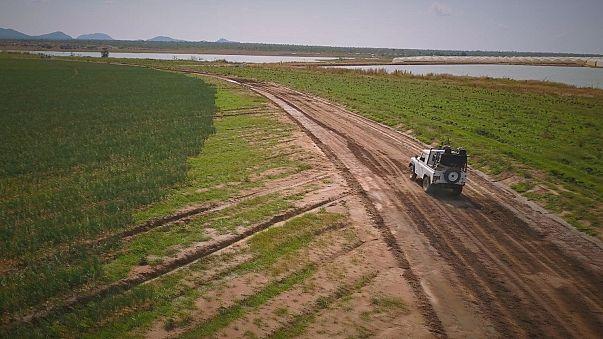الأعمال الزراعية في أنغولا جذابة للاستثمار