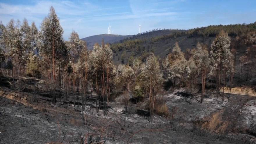 Scorched aftermath of deadly Portuguese wildfires