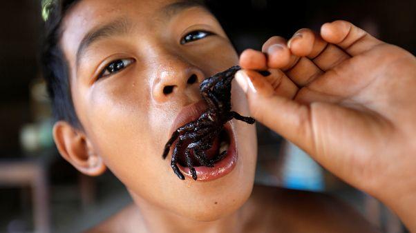 Τρώγοντας αράχνες στην Καμπότζη