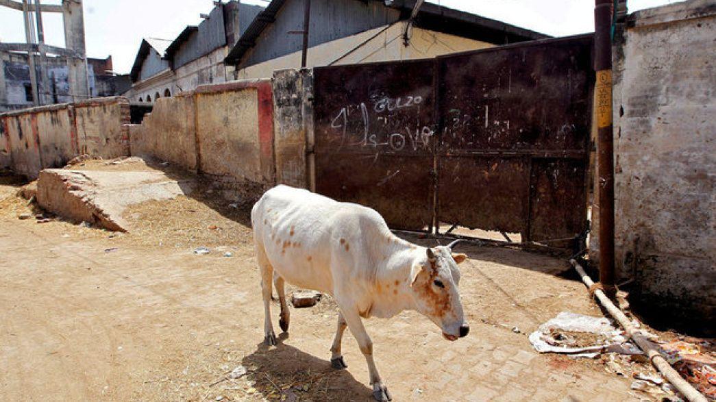 مقتل شاب هندي مسلم لاتهامه بنقل لحم بقر في أمتعته