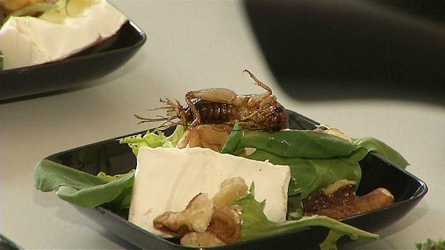 Рагу из насекомых - пища будущего