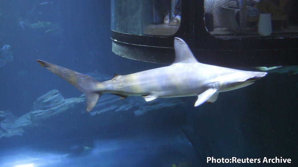 Tod durch Kokusnuss oder Haibiss? Was ist wahrscheinlicher?