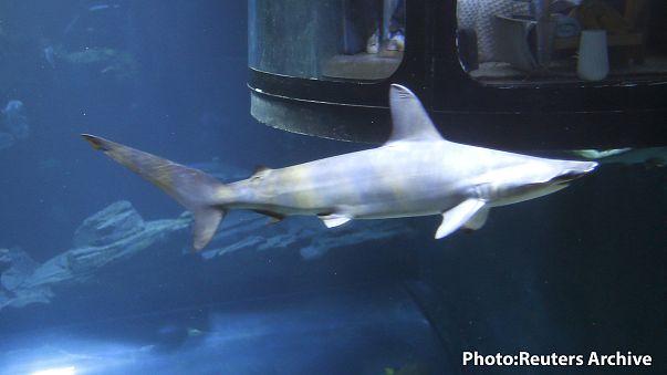 Nagyobb az esélye, hogy meteor öl meg, mint egy cápa