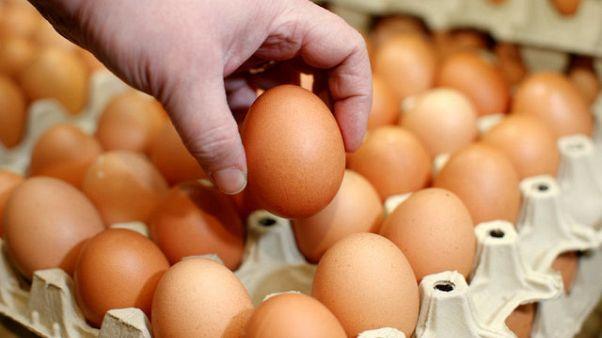 Inghilterra: il campionato del lancio delle uova