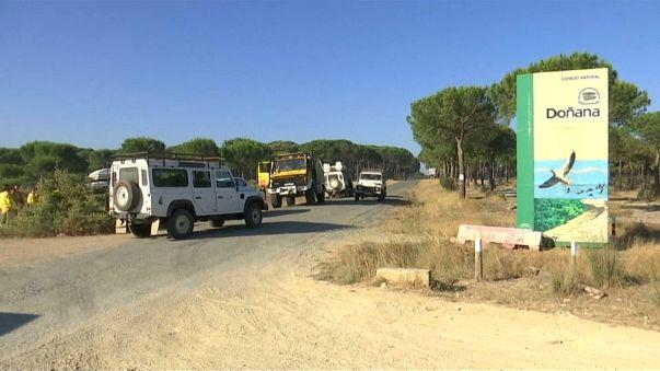 Doñana se salva de las llamas