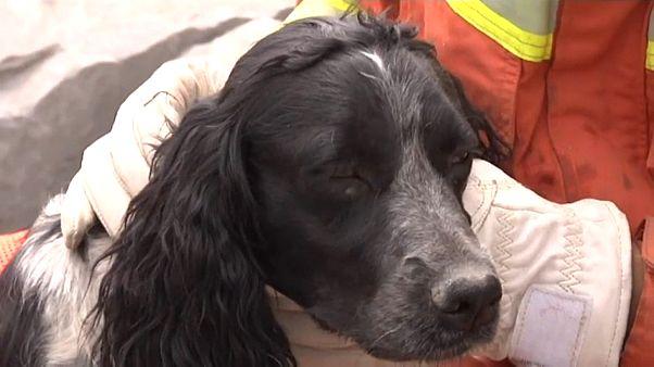 Spürhunde: Suchen bis zum Umfallen