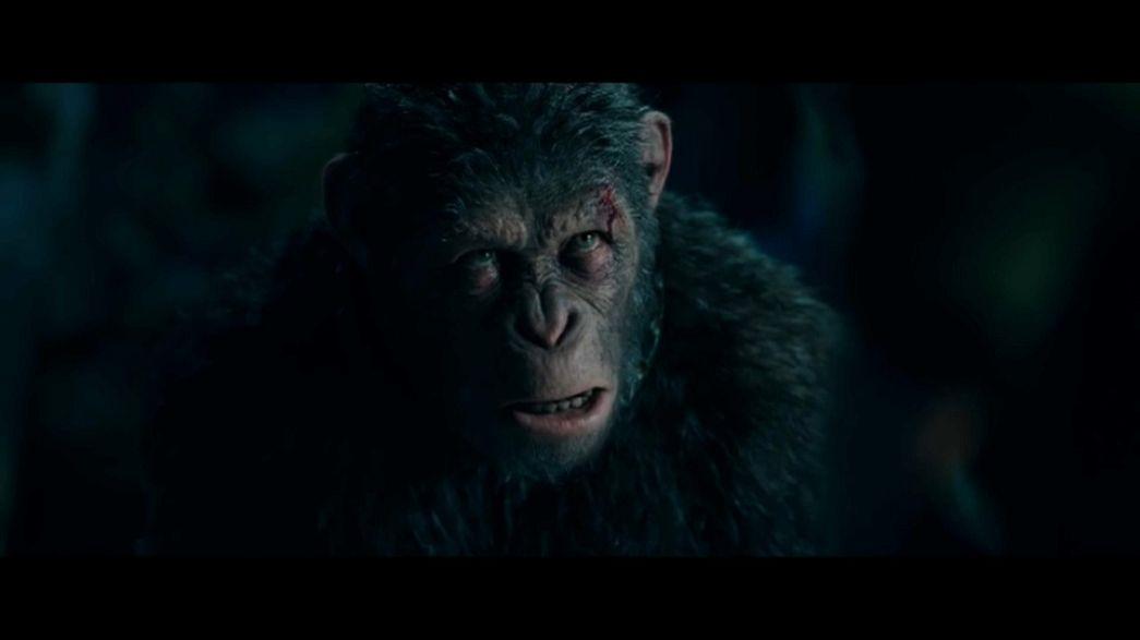 Le point de vue du singe