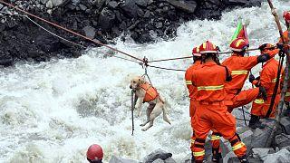 Los perros rastreadores se afanan para encontrar supervivientes en China
