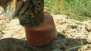 Ιταλία: φρούτα δροσίζουν ζώα από τον καύσωνα
