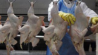Grippe aviaire : le Zimbabwe, la Namibie, le Botswana et le Mozambique interdisent les volailles sud-africaines