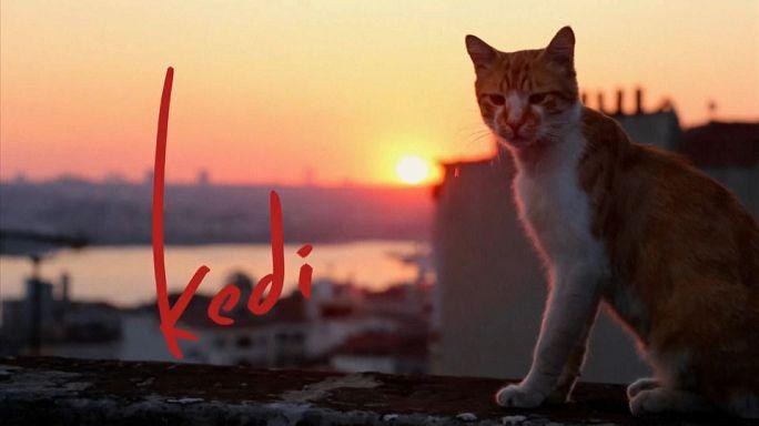 İstanbul kedileri dünya turunda