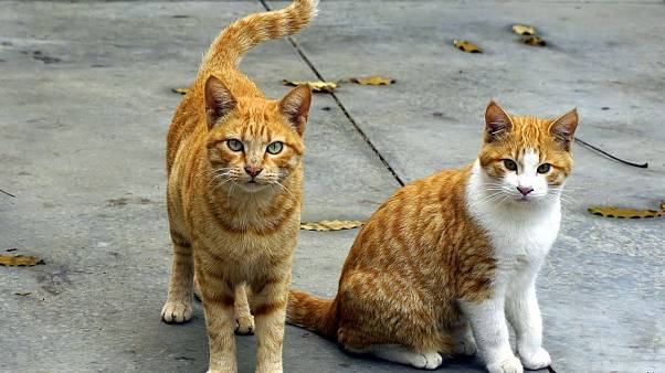 Megoldódott a 200 halott macska rejtélye