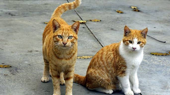 Who or what is killing Narbonne's cats?