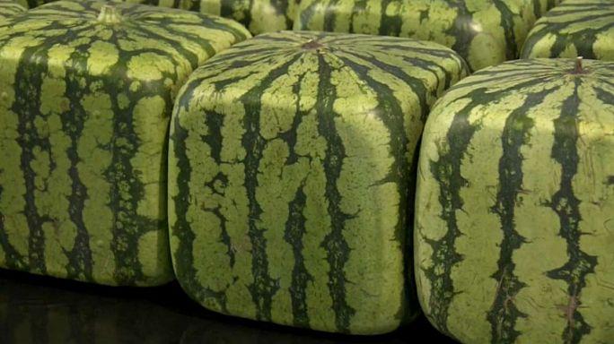 Des cultivateurs améliorent la pastèque carrée, sucrée et facile à ranger