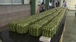 نمایشگاه هندوانههای مکعبی در ژاپن