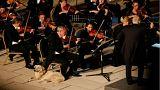 Sokak köpeğinin klasik müzik ilgisi