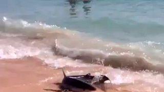 Haie am Strand