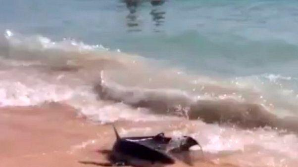 Cápák a strandon