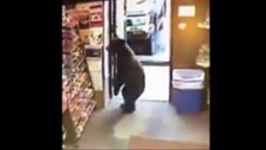 Watch: Bear stuns worker after wandering into Alaska store
