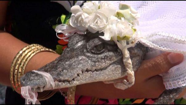 Mayor of Mexican fishing town 'marries' crocodile bride