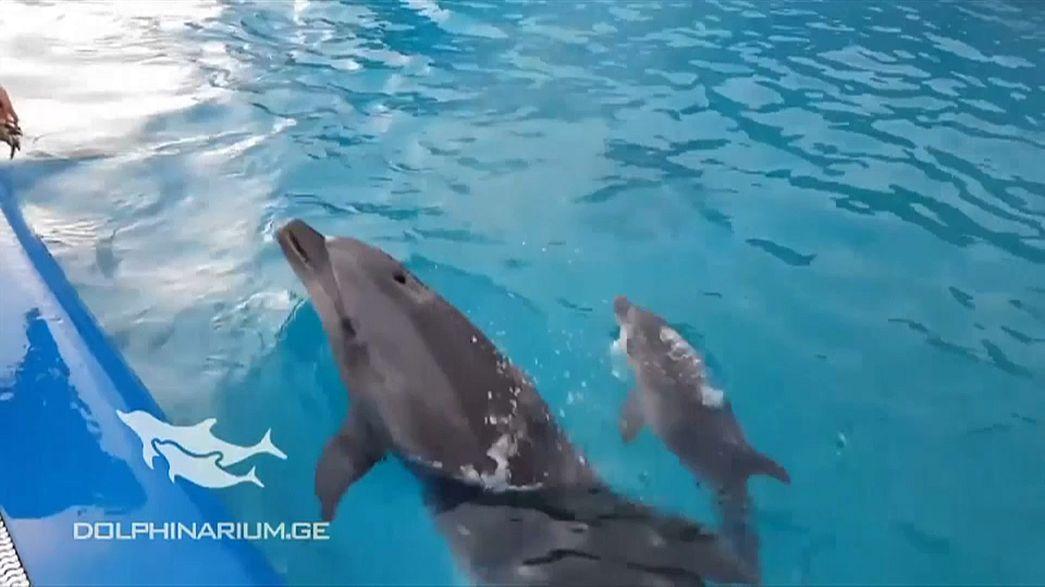 Прибавление семейства у дельфинов